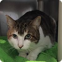 Adopt A Pet :: Suezie - Lafayette, NJ
