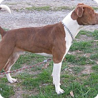 Adopt A Pet :: Chance - Hillsboro, OH