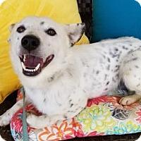 Adopt A Pet :: Pebbles - Scottsboro, AL