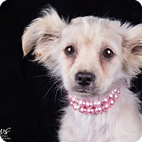 Adopt A Pet :: Kia - Lodi, CA