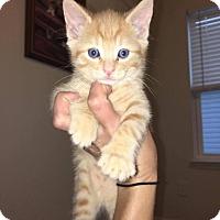 Adopt A Pet :: Leo - Winston-Salem, NC