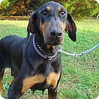 Adopt A Pet :: MACY - ROCKMART, GA