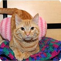 Adopt A Pet :: Atlas - Farmingdale, NY