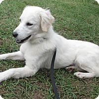 Adopt A Pet :: Oakley - Jacksonville, FL