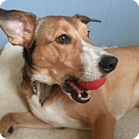 Adopt A Pet :: Wembley (Wicklow) - Fishers, IN