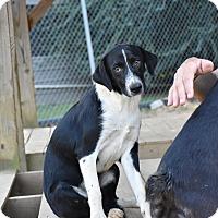 Adopt A Pet :: Caldwell - Groton, MA