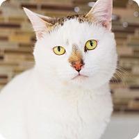 Adopt A Pet :: Benny - Xenia, OH