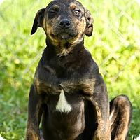 Adopt A Pet :: Gazelle - Auburn, CA