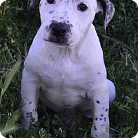 Adopt A Pet :: Crayon: Maroon - Palo Alto, CA