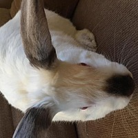 Adopt A Pet :: Brandon Hopinson - Maple Shade, NJ