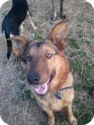 German Shepherd Dog Dog for adoption in Alpharetta, Georgia - Deuce