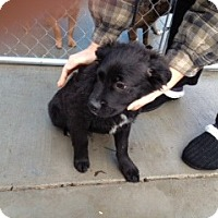 Adopt A Pet :: Brady - Seattle, WA