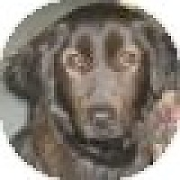 Adopt A Pet :: Jodie - Denver, CO