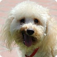 Adopt A Pet :: Mia - La Costa, CA