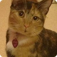 Adopt A Pet :: Josette - Burbank, CA