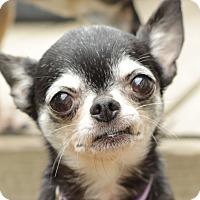Adopt A Pet :: Sophie - Romeoville, IL