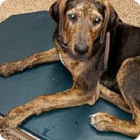 Adopt A Pet :: Enchanted - Dallas, TX