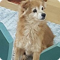 Adopt A Pet :: Fluffy - Oakton, VA