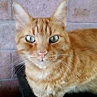 Adopt A Pet :: Duncan - Palo Cedro, CA