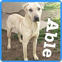 Adopt A Pet :: Able - Royse City, TX