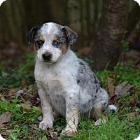 Adopt A Pet :: Nala - Groton, MA