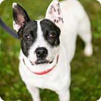 Adopt A Pet :: Kyle - Reisterstown, MD
