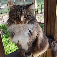 Adopt A Pet :: No name yet - Chesterfield, VA