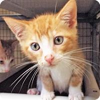 Adopt A Pet :: Bottles - Grants Pass, OR