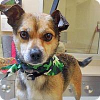 Adopt A Pet :: Ringo - Wildomar, CA