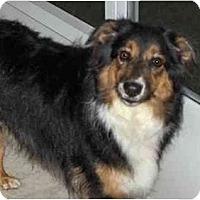 Adopt A Pet :: Reecey - Orlando, FL