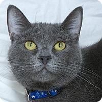 Adopt A Pet :: Ms Viola - Sacramento, CA