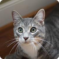 Adopt A Pet :: Beni (adoption pending) - Richmond, VA
