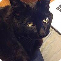 Adopt A Pet :: Brady - Blackwood, NJ