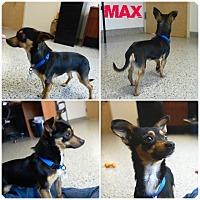 Adopt A Pet :: Max - Auburn, CA
