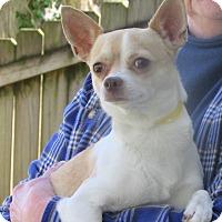 Adopt A Pet :: Fernando: Family Dog - House Springs, MO