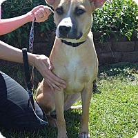 Adopt A Pet :: Molly - sanford, NC