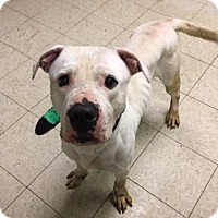 Adopt A Pet :: Birch- Ohio - Fulton, MO