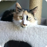 Adopt A Pet :: FALLON - Clayton, NJ