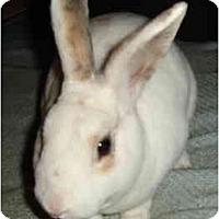 Adopt A Pet :: Derringer - Santee, CA