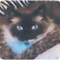 Adopt A Pet :: Kuiipo - Anchorage, AK