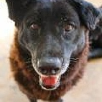 Shepherd (Unknown Type) Dog for adoption in Memphis, Tennessee - Samara