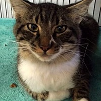 Adopt A Pet :: Merlin - Porter, TX
