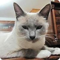 Adopt A Pet :: Heidi - Davis, CA