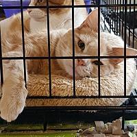 Adopt A Pet :: Tanner - Monrovia, CA