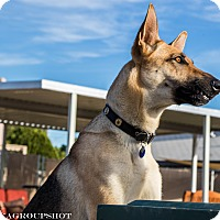 Adopt A Pet :: Sheeva - Phoenix, AZ