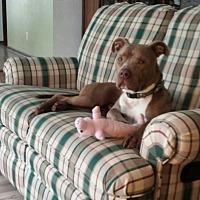 Adopt A Pet :: Liam - Wisconsin - Fulton, MO