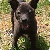 Adopt A Pet :: Mandy - Sagaponack, NY