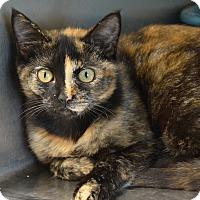 Adopt A Pet :: 10310441 - Brooksville, FL