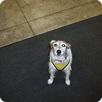 Adopt A Pet :: JACKSON - Sandusky, OH