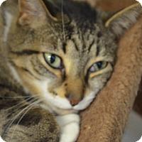 Adopt A Pet :: Jude - Martinsville, IN